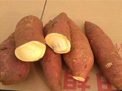 濟薯26廠家_知名的濟薯26供應商