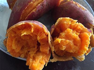 普薯32生产厂家|廊坊价格合理的普薯32供应