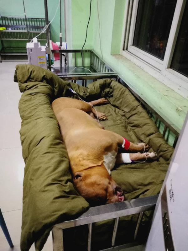 有口碑的宠物医院服务当选洛阳宠康宠物医院|精选宠物医院