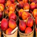 直销聚鑫源农作物种植专业合作社-哪里有批发小麦高粱玉米种子