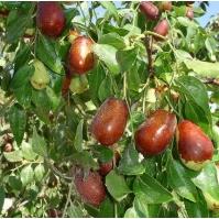 出口聚鑫源農作物種植專業合作社|品種好的農作物種植種子批發