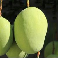 聚鑫源农作物种植专业合作社库存-山东农作物种子批发价格