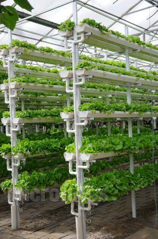 蔬菜种植槽