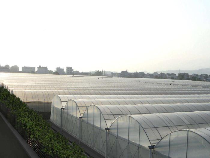 温室大棚建造-供应潍坊优惠的温室大棚
