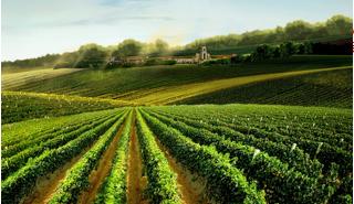 重庆进口葡萄酒-新品进口葡萄酒上哪买