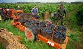 烟台价格实惠的进口葡萄酒批发 倾销进口葡萄酒