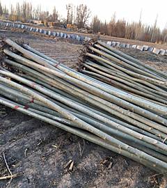 青海大规格新疆杨-想要优惠的新疆杨就来海龙苗木