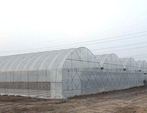 连栋温室-实用的连栋温室哪里有