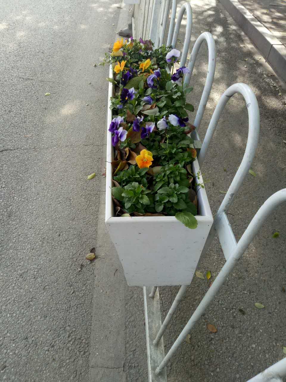 隆森景观设施优惠的护栏花盆出售|批发护栏花盆