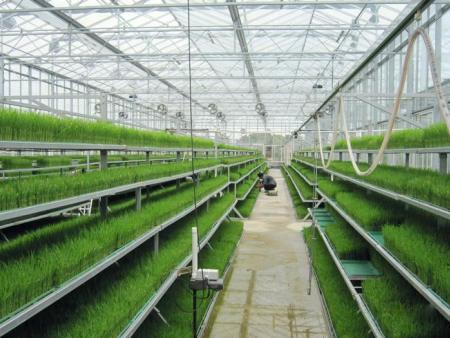 温室植物工厂 建设智能温室植物工厂大棚