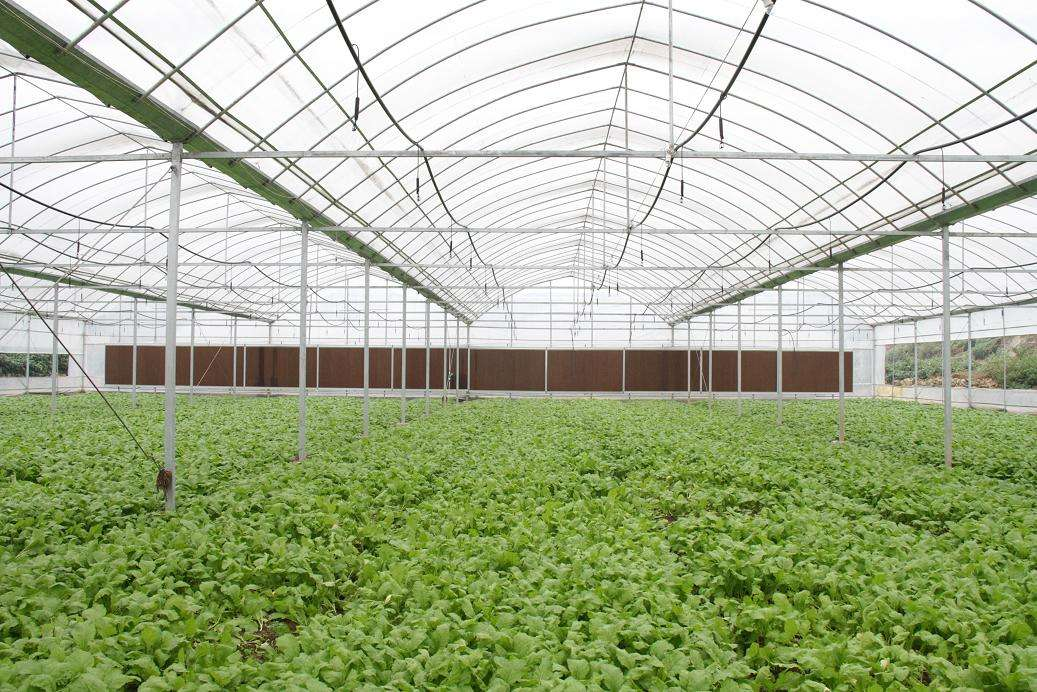 育苗温室大棚承建-育苗温室大棚建造费用