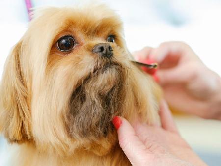 双塔宠物美容价格-哪里有提供专业宠物美容