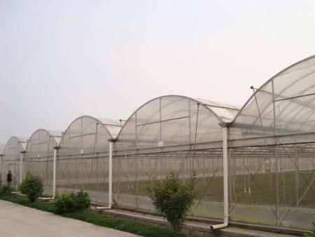 蔬菜大棚哪家好-蔬菜大棚認準森瑞溫室工程