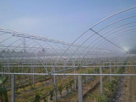 蔬菜大棚施工_高質量的蔬菜大棚建設