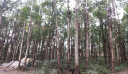 四川实力可靠的策划咨询公司|甘肃景观设计