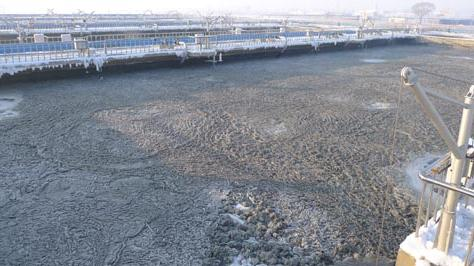 沈陽活性污泥價格-活性污泥合作哪里有