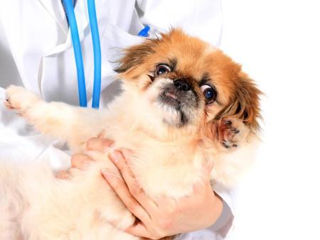 建平宠物预防针价格-朝阳地区具有口碑的宠物预防针服务