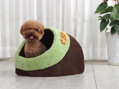 凌源宠物之家告诉您宠物手术后应该要注意什么?