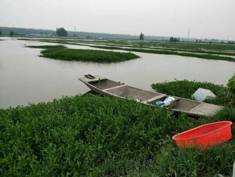 宿迁名声好的龙虾苗供应商推荐|台湾哪里有龙虾苗