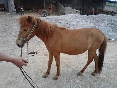 劃算的矮馬租賃|實惠的矮馬哪里有