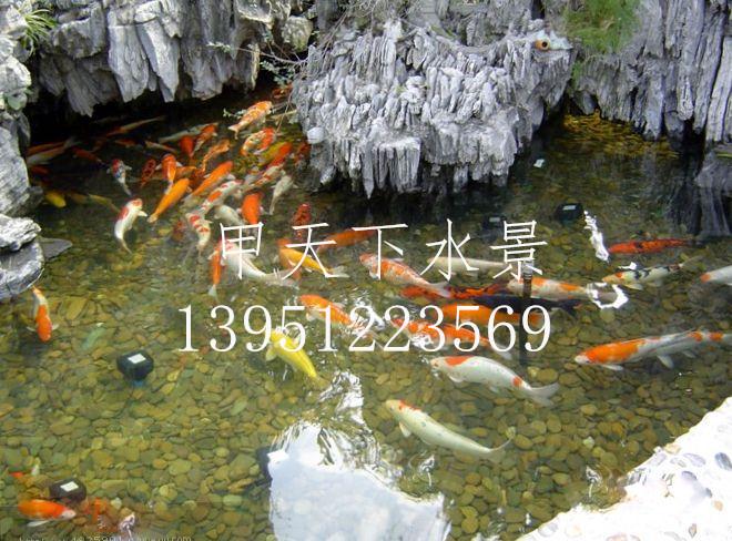 苏州市庭院鱼池水处理!专业解决水质问题
