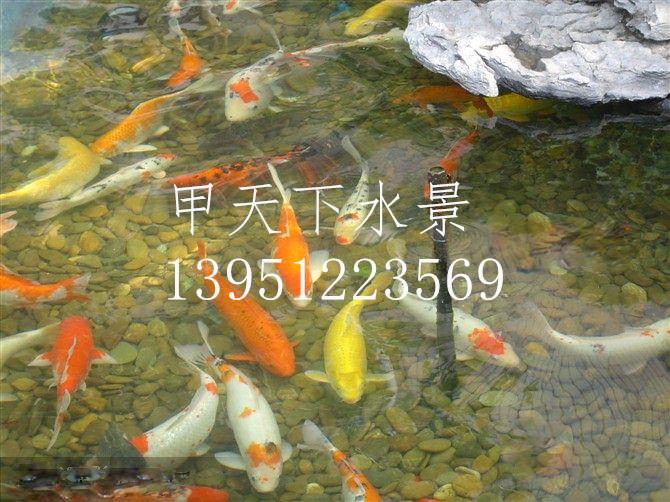 南京市锦鲤鱼池过滤公司。48小时清澈见底!
