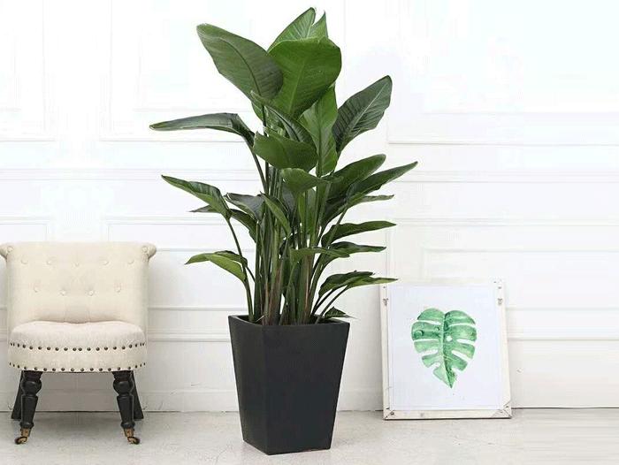 哈尔滨花卉租赁 哈尔滨花卉批发 哈尔滨花卉零售