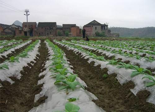 桂林地膜批发商——为您提供好的烟草种植地膜资讯