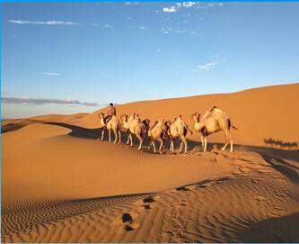 内蒙古沙漠旅行社-阿拉善盟周到的大众群体旅游景区推荐