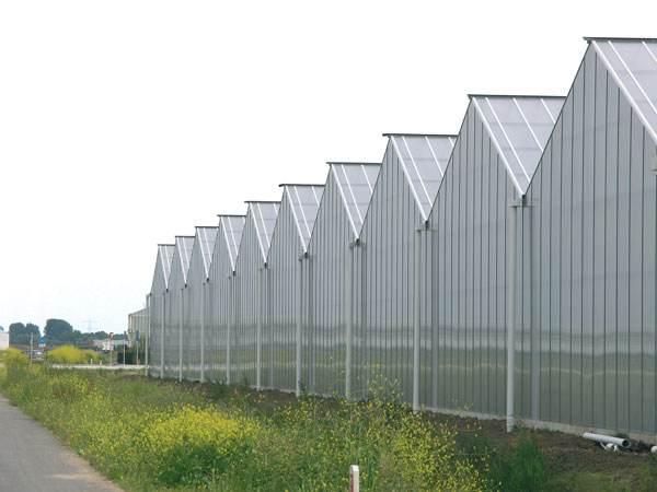 连栋温室大棚的设计建造哪家好——山东鑫博温室工程有限公司|行业资讯-山东鑫博温室工程有限公司