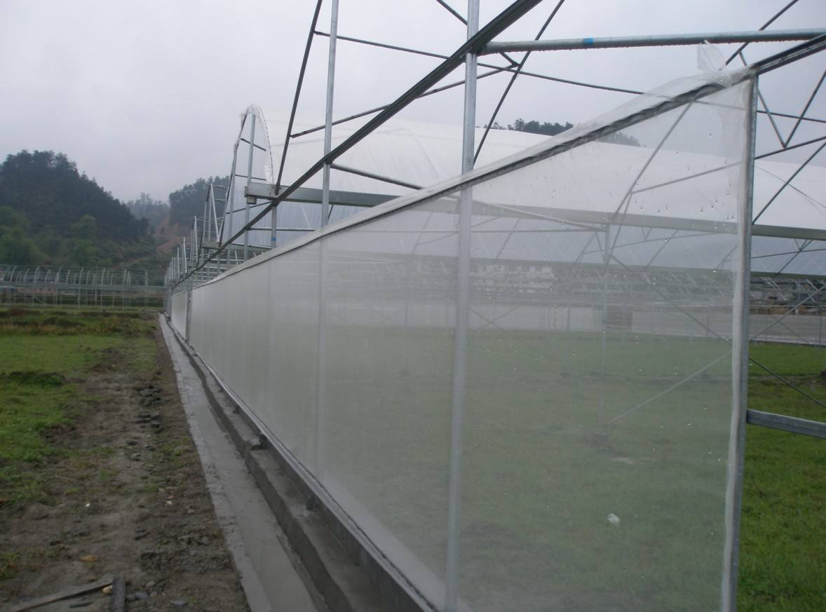 宁夏防虫网生产厂家|为您推荐品牌好的防虫网