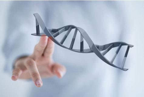 成人基因全套