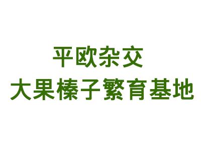 本溪满族自治县碱厂镇兴盛花圃平欧杂交大果榛子繁育