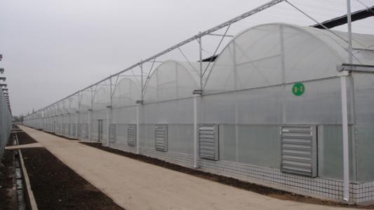 温室大棚造价|河北结实耐用的连栋薄膜温室