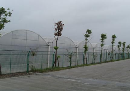 连栋大棚造价厂家-哪里有提供效果好的连栋薄膜温室