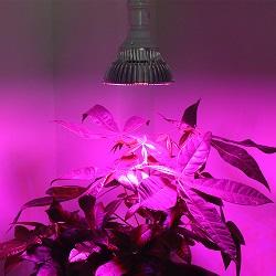 LED植物生长灯的作用与优势