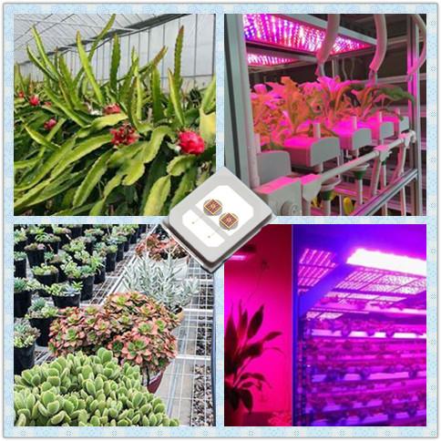 東莞性價比高的植物補光燈品牌推薦-批售植物補光燈