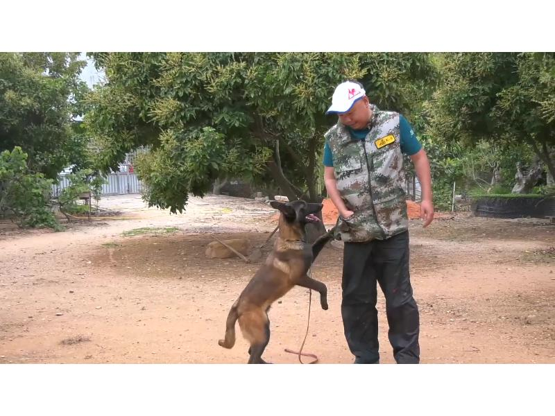 绍兴训犬-泉州服务好的训犬培训