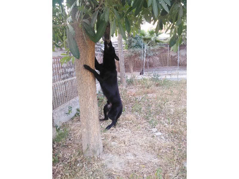 珠海训犬_赛虎宠物服务,口碑好的训犬培训公司