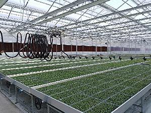 大棚喷灌机怎么使用,才能对温室大棚起到作用