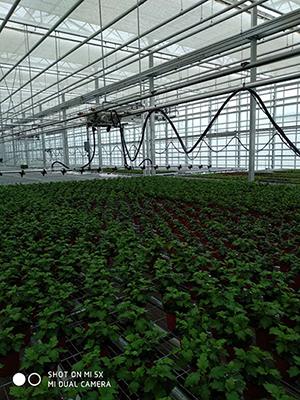 全自动大棚喷灌机厂家,大棚喷灌机建造找绿鑫温室设备