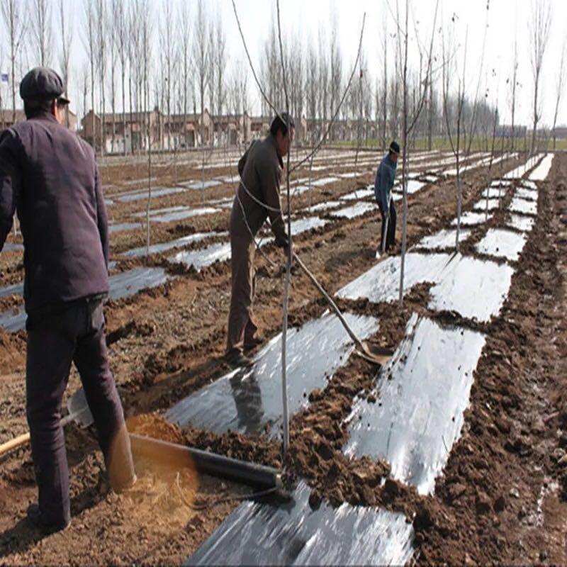 桂林地膜厂家-供应桂林有品质的柳州地膜