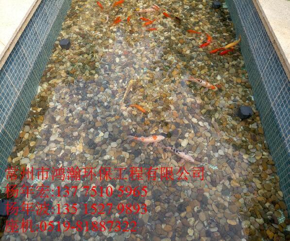 揚州市別墅景觀魚池水凈化工程,365天不用換一滴水,水質清澈