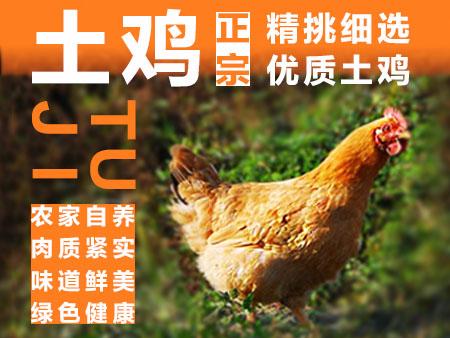 贵州毕节土鸡