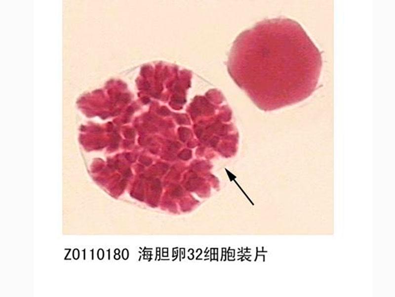 显微镜玻片