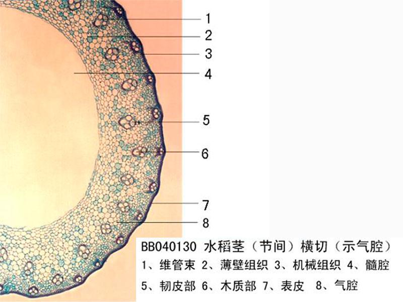 洛阳显微镜玻片|金博通科教仪器提供品牌好的显微镜玻片