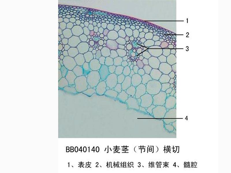 想买口碑好的显微镜玻片,就到金博通科教仪器,山东显微镜玻片