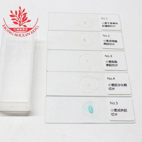 河南信誉好的遗传学生物切片经销商_遗传学生物切片批售