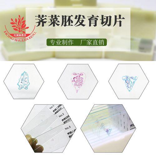 植物学生物切片