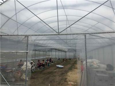 廣西農業溫室連棟大棚-連棟大棚建造找哪家